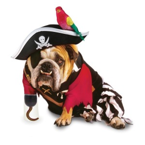 dog-pirate-costume